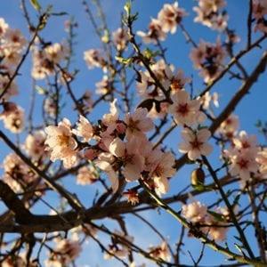 Blossoms | La Zahurda