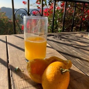 Orange Juice | La Zahurda