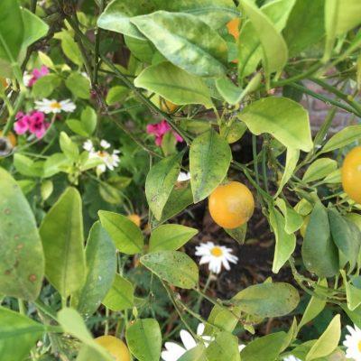 Flowers and Fruit | La Zahurda