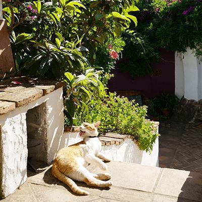 Cat | La Zahurda