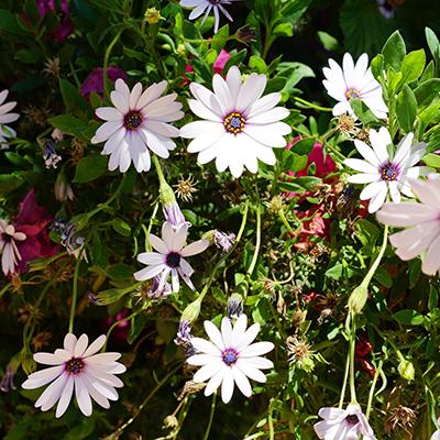 White Flowers | La Zahurda