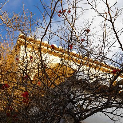 Tree | La Zahurda